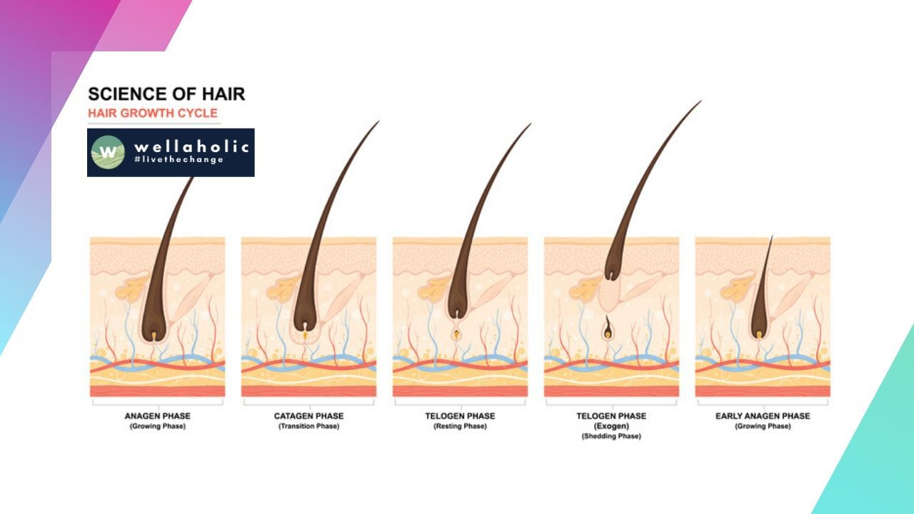 Hair removal is a procedure where a specific beam of light passes through the epidermis (surface layer of the skin) and then targets the follicles.
